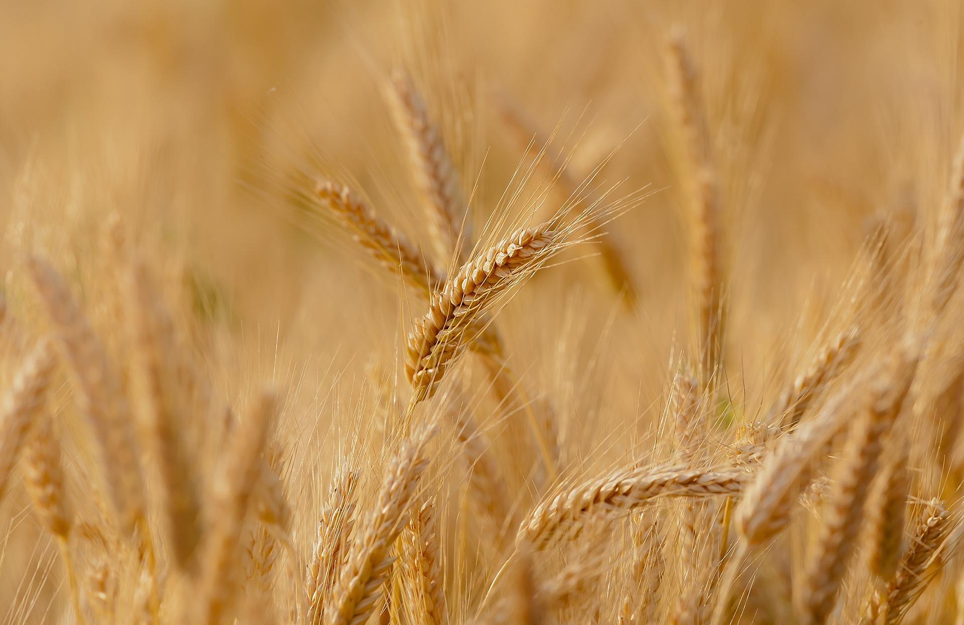 La enfermedad Celíaca y la Sensibilidad al gluten NO Celíaca